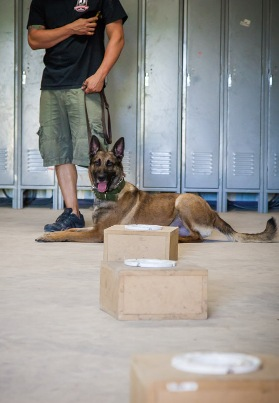 bomb dogs explosives detection