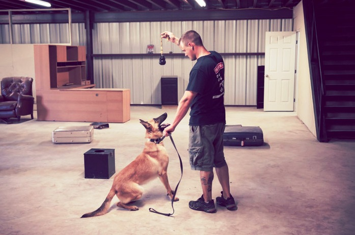 selection tested detection dogs