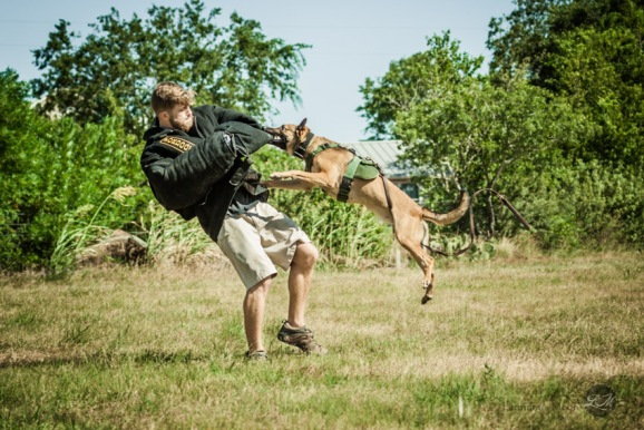Police Dog training area Pacesetter K9